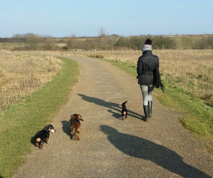 Ruby Dog Walking St Albans loves a countryside walk...On-lead and off-lead depending on client criteria #trust #dogwalker