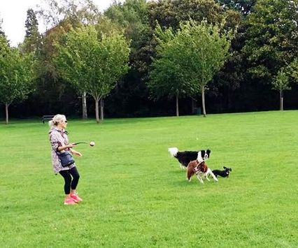 Running around and having fun with the dogs, keeps them happy and healthy #happydogs #favouritegame