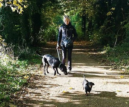 Autumn is upon us once again! Luckily we've still had some nice, dry weather. Walking these boys in Harpenden.