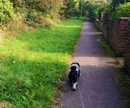 Solo and 1-2-1 walks. Countryside walking in St Albans