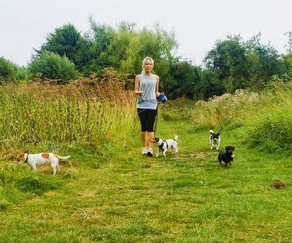 Summertime dog walking my favourite Jack Russells